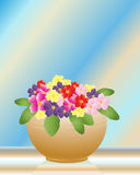 Primroses Royalty Free Stock Photo
