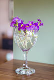 Primroses in glass of wine Stock Photo