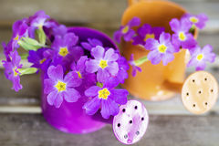 Primroses in mini watering cans Stock Photography
