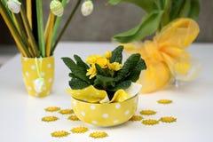 Primula amarillo Imágenes de archivo libres de regalías