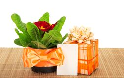 Primula on bamboo cloth, gift box and card Stock Photo