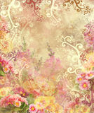 primula flower beautiful pink and yellow background Royalty Free Stock Photos