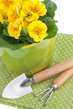 Primula Flowers with Garden Tools Stock Photography