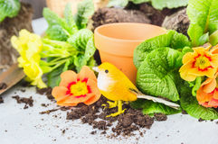 Primula flowers potting with decoration bird Stock Photography