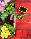 Primula gardening with scoop,soil and sign on red wooden timber background Stock Photos