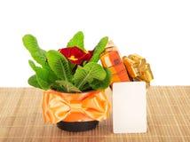 Primula na bambusowym płótnie, prezenta pudełku i karcie, Obraz Stock
