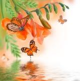 Primula och fjäril för vår gul Arkivfoton