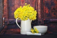 Primula veris flowers Stock Photography