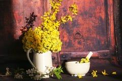 Primula veris flowers Stock Photo