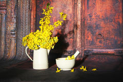 Primula veris flowers Royalty Free Stock Photo