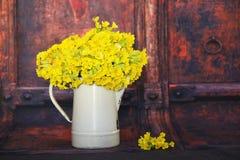 Primula veris flowers Stock Images
