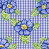 Primulas on blue background. Beautiful penciled pattern with primulas on checkerboard cloth Royalty Free Stock Image