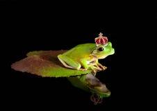 Prince de grenouille sur la lame Photographie stock libre de droits