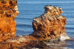 Prince Edward Island Cliffs Royalty Free Stock Photos