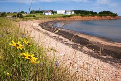 Prince Edward Island coastline. Wildflowers on Prince Edward Island coast near village of North Rustico in Green Gables Shore,  PEI, Canada Royalty Free Stock Images