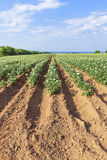 Prince Edward Island Farm Fields Stock Photography