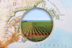 Prince Edward Island potatoes Stock Images