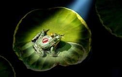 Prince frog Stock Image