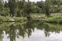 Prince`s Island Park. Seen the Bow River banks stock photography