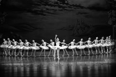 Prince Siegfried Falls In Love With The Swan Princess Ojta-ballet Swan Lake Stock Images