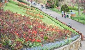 Princes Street Gardens Edinburgh. Springtime in Princes Street Gardens, Edinburgh Royalty Free Stock Image