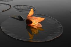 Princesa del agua en la puesta del sol foto de archivo