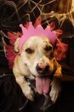Princesa Pupp de Halloween Imagem de Stock