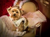 Princesa real Doggie do cão Fotografia de Stock Royalty Free