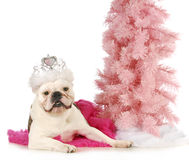 Princess dog Stock Images