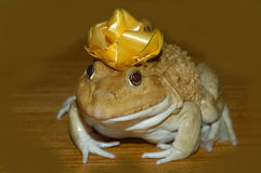Princess and the Frog Stock Photo