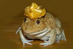 Princess i żaba zdjęcie stock