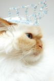 Princess Kitty. Beatiful white cat with crown on head Royalty Free Stock Photography