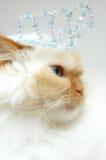 Princesse Kitty Photographie stock libre de droits