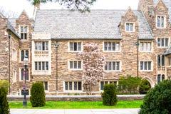 Princeton-Campus in NJ Frühling in Princeton-Dorf stockfotos