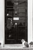 Principal gato del perro ratonero del Downing Street 10 Imagenes de archivo