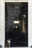 Principal gato del perro ratonero del Downing Street 10 Fotografía de archivo libre de regalías
