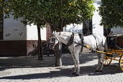 Horse Drawn Carriage in the city of Seville in Andaucia Southern Spain. The principal Moorish and Gothic buildings in the old quarter of Seville are a UNESCO Stock Image