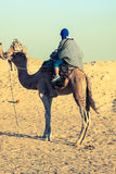 Principaux touristes de Beduins sur des chameaux à la visite de touristes courte autour Photographie stock