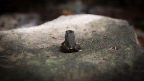 Principe della rana Fotografie Stock