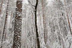 Principio del invierno Fotos de archivo