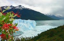 Pring auf Gletscher Lizenzfreie Stockbilder
