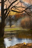 Pring european landscape in park with duck, pond, tree Stock Images