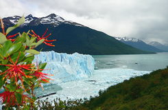 Pring on glacier Royalty Free Stock Images