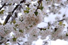 Pring sezon zapewnia wielką przyjemność, radość i szczęście, Obraz Stock
