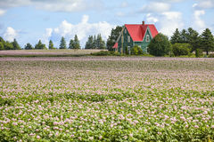 Prins Edward Island Potato Farm Arkivbilder