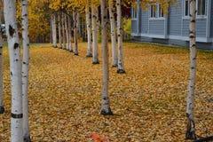 Prinses Lodge Fairbanks van Alaska stock afbeeldingen