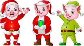 Cartoon pigs wearing Christmas costumes. Illustration of Cartoon pigs wearing Christmas costumes stock illustration