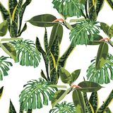 Abstract seamless texture with leaves Sansevieria, ficus and monstera plant green. stock illustration