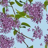 Spring floral background. Branch of a blossoming Lilac seamless pattern. royalty free illustration
