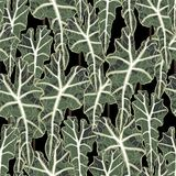 Exotic seamless pattern. Realistic floral illustration with rein forest plants leaves. Black background royalty free illustration